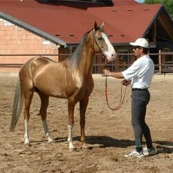 вакансия  требуется конюх  конюший  коневод  на ферму во франции