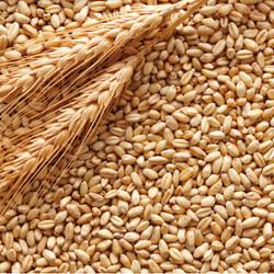 купим зернові