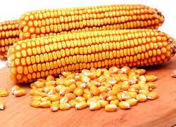 купим ячмінь   пшеницю   кукурудзу