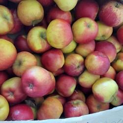 яблоки оптом розелла  гала  орио  сириус  джонапринц