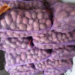 картопля насіннєва  картопля товарна
