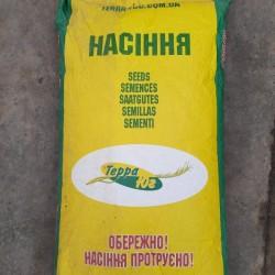 продам насіння соняшника  сорт  княжий