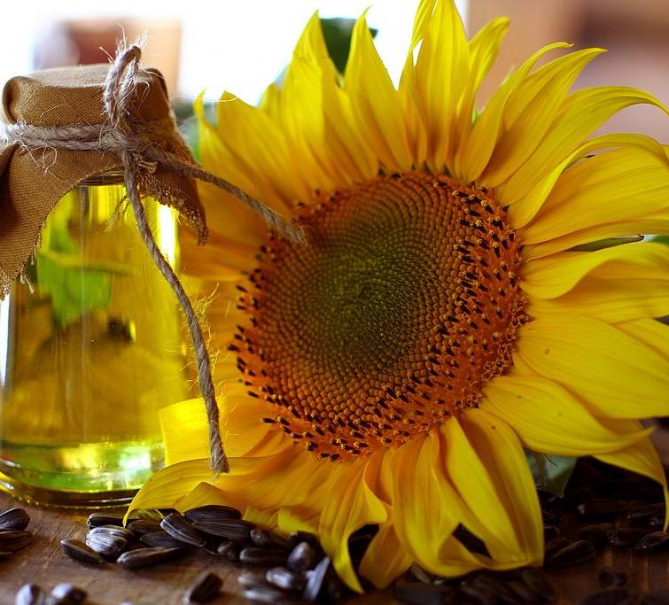 Prices for Ukrainian sunflower oil are growing due to a shortage of raw materials - Refinitiv