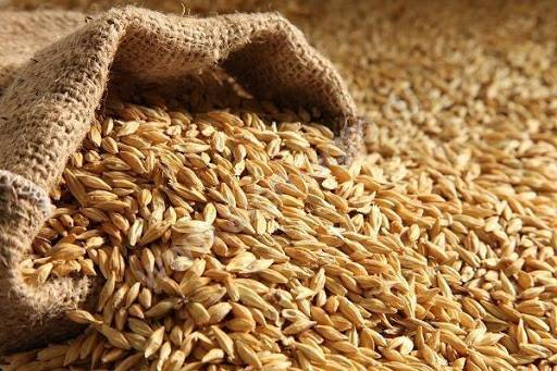 More Than 60% of Ukraine's Barley Exports Go to China