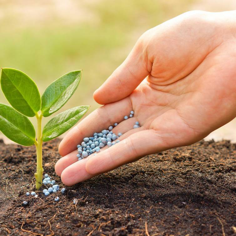 Producers Defended Quotas for Fertilizer Import in the Court