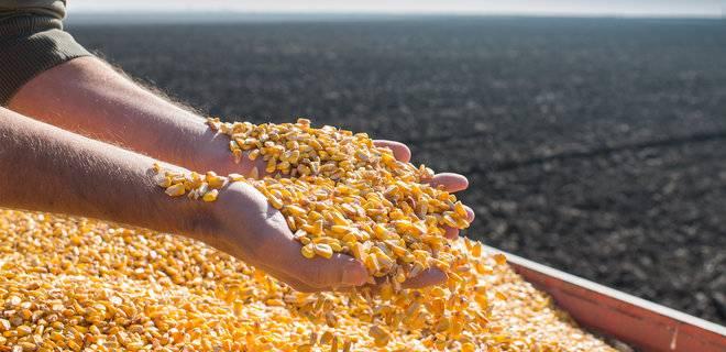 Export of Corn From Ukraine Decreased by 25%
