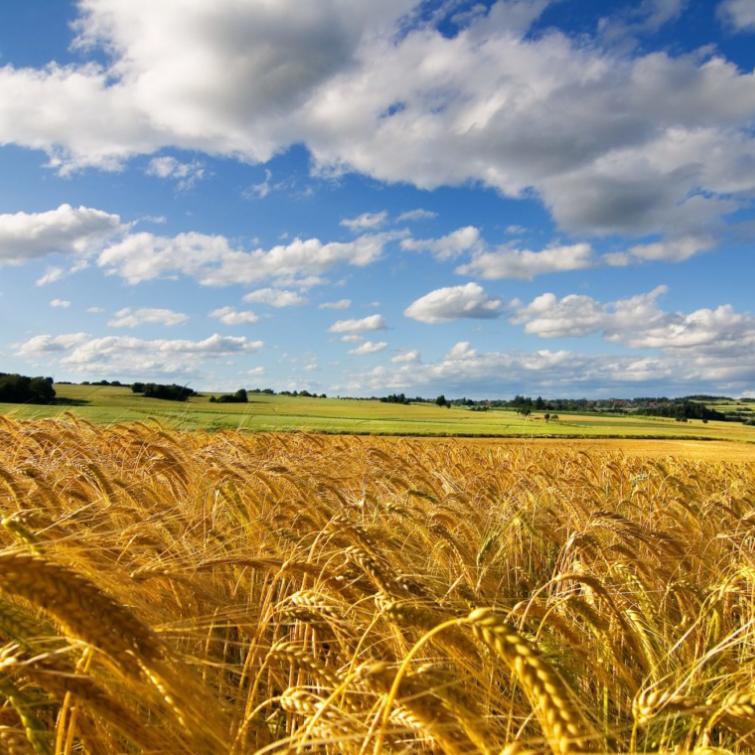 Кабмін спростив процедуру отримання державної підтримки для агрокомпаній