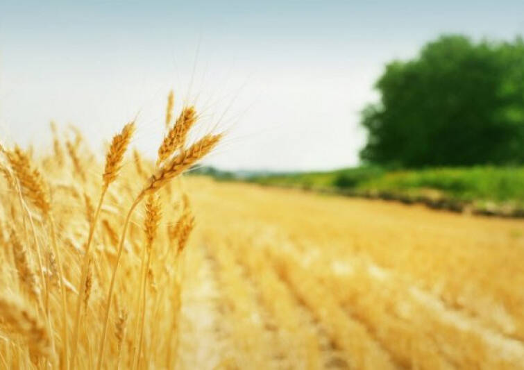 Ukraine Adopted a Law on Agricultural Insurance