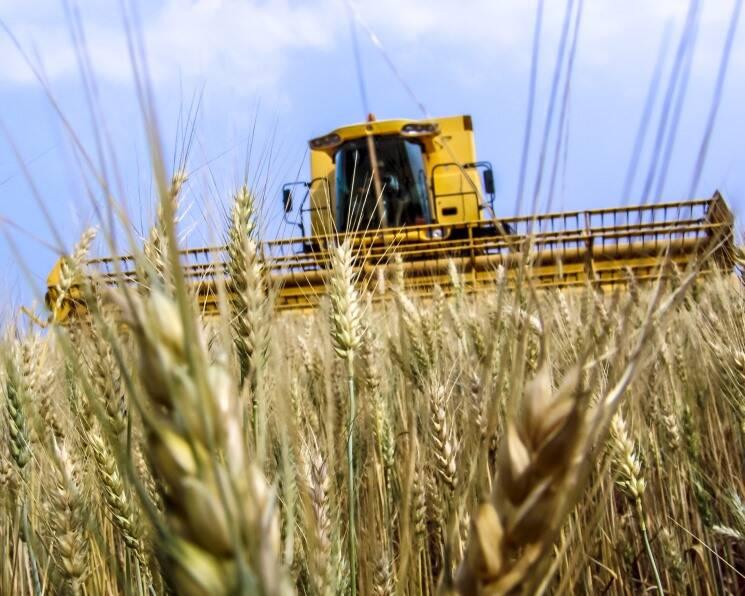 Rainy July Weather May Reduce Grain Yields