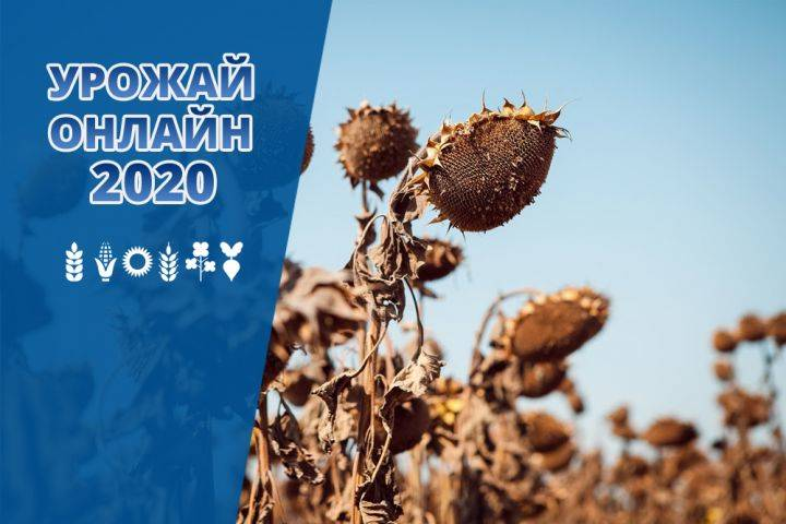 Sunflower harvesting is coming to the finish line in Ukraine - Harvest online 2020